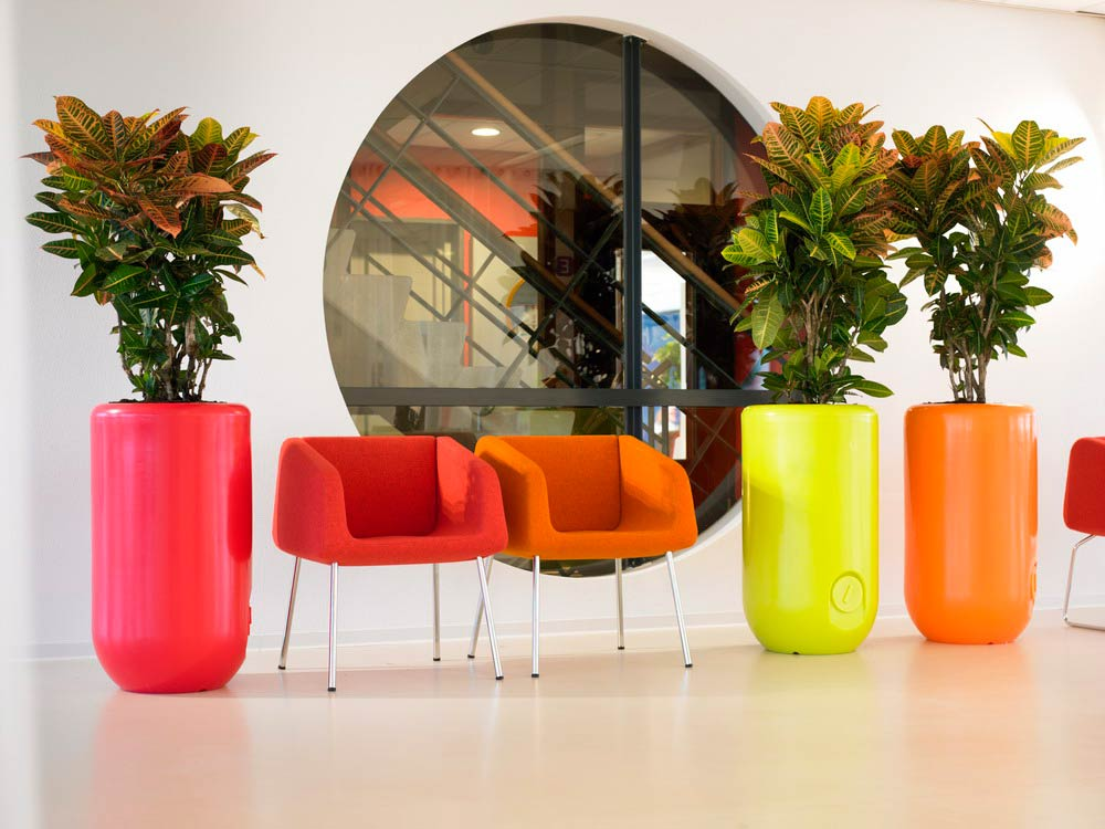 Bright office plants by eco office plants