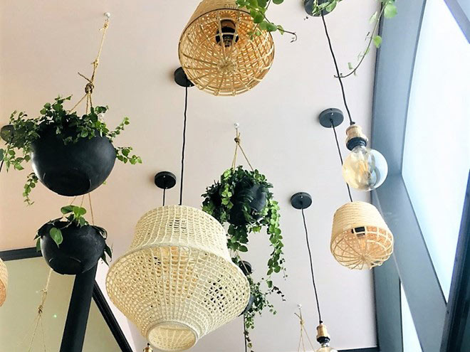 Ceiling baskets and lights with eco office plants