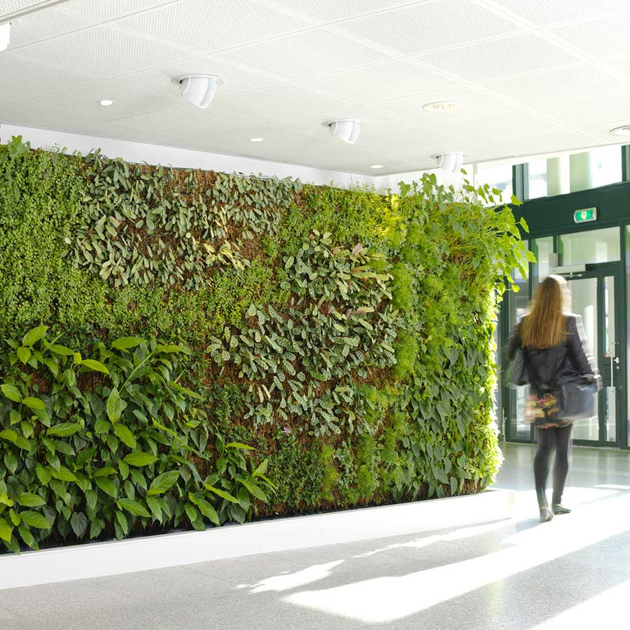 Interior green wall with eco office plants