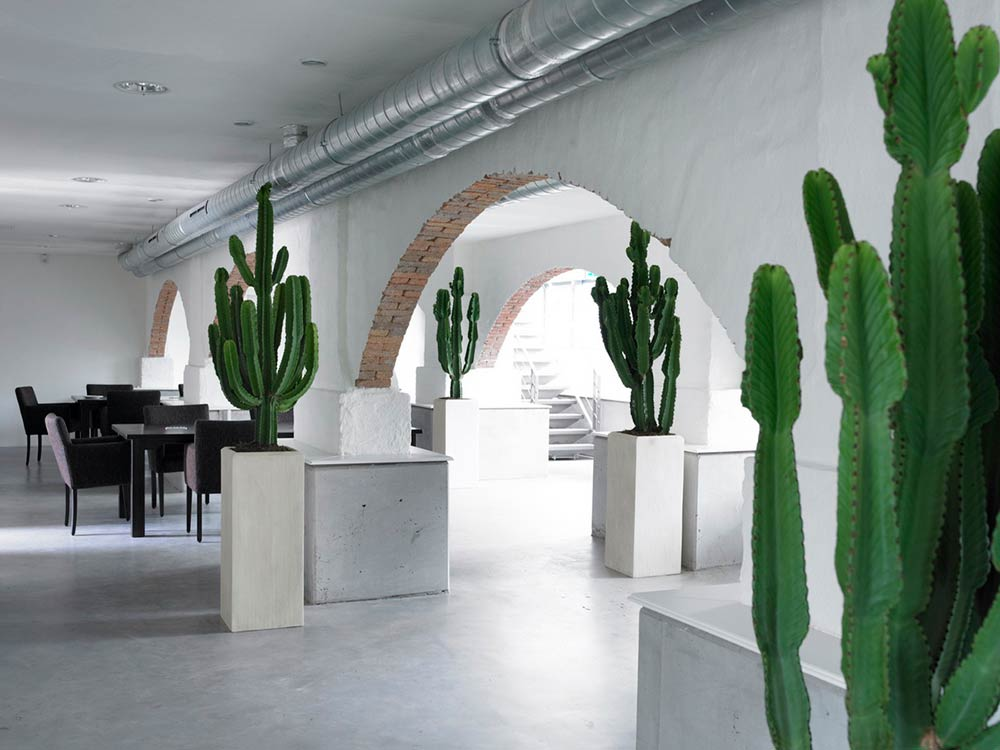 Interior office cactus plants with eco office plants