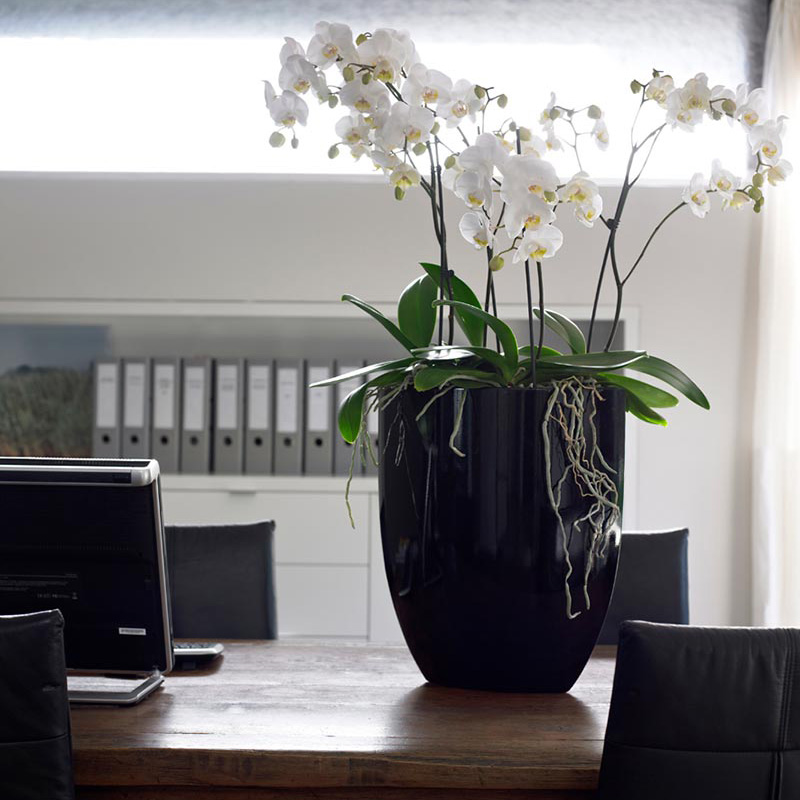 Orchids for the office with eco office plants