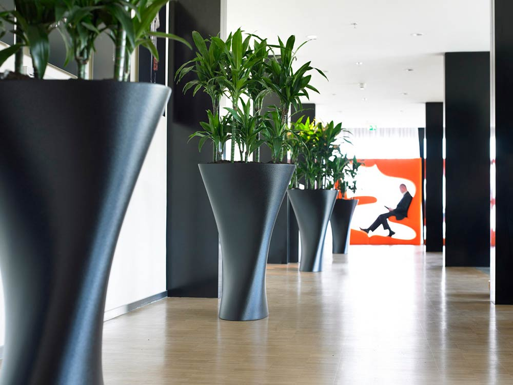 Interior office tall black plant pots