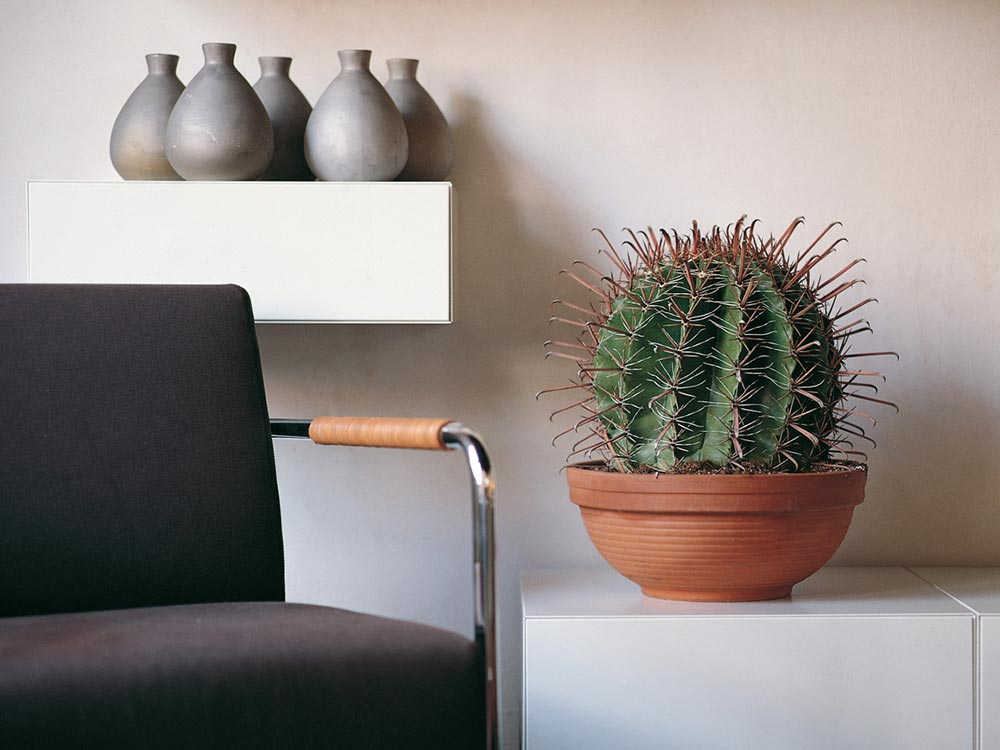 Striking office cactus with eco office plants