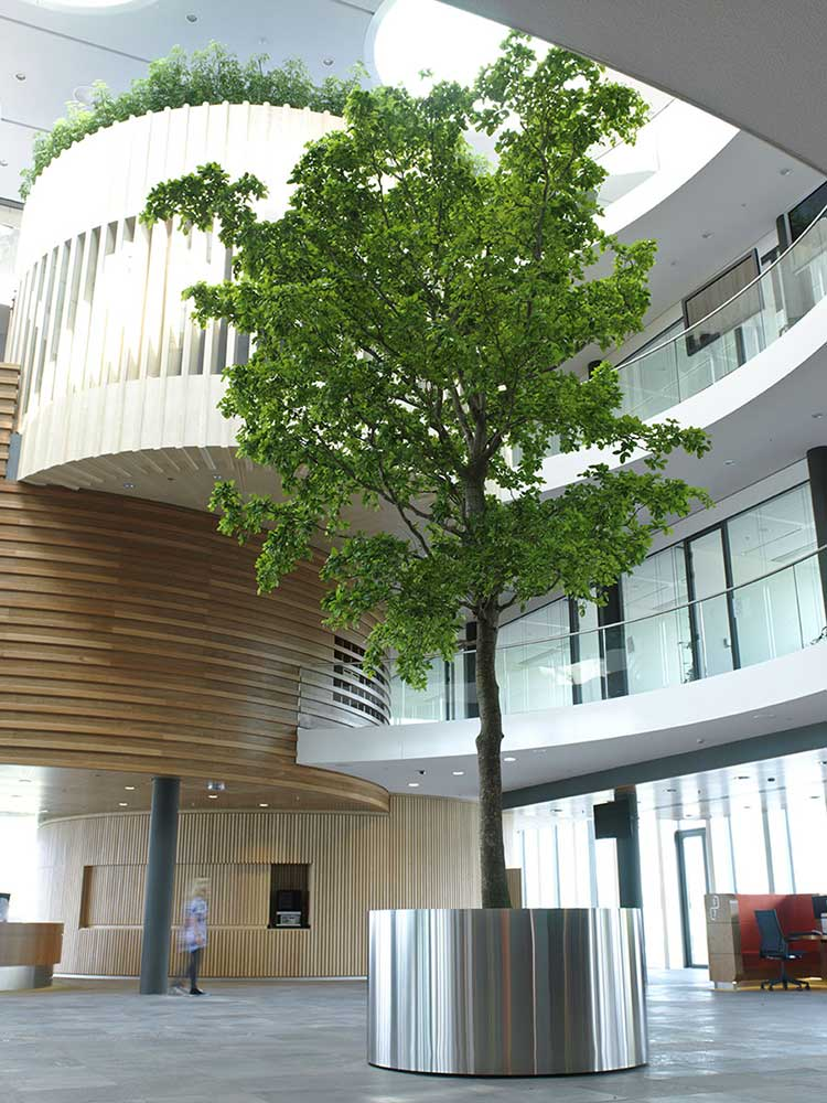 Office ornamental tree