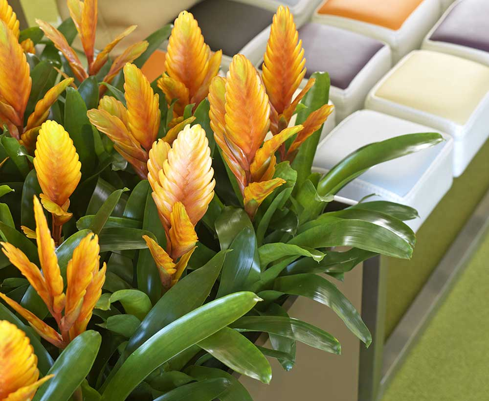 Orange office flowers with eco office plants