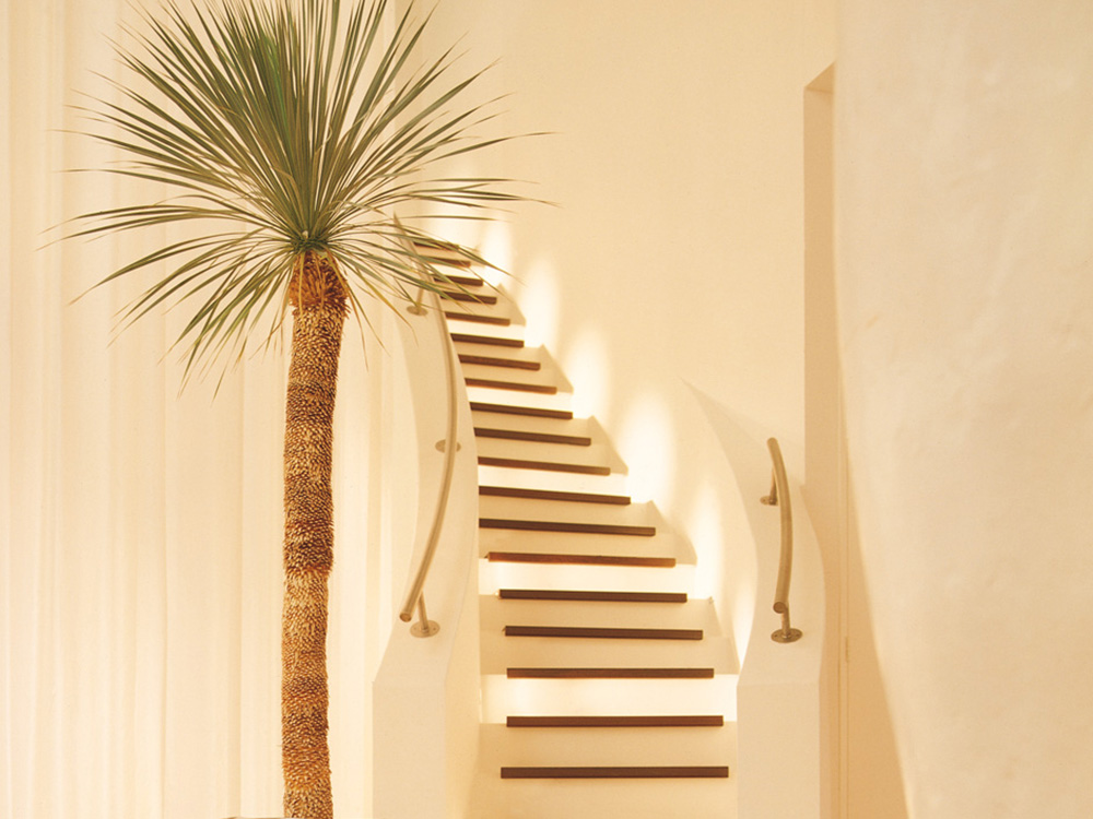 Palm Tree by staircase with eco office plants