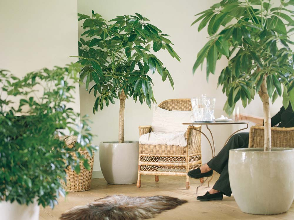 Interior office plants with eco office plants