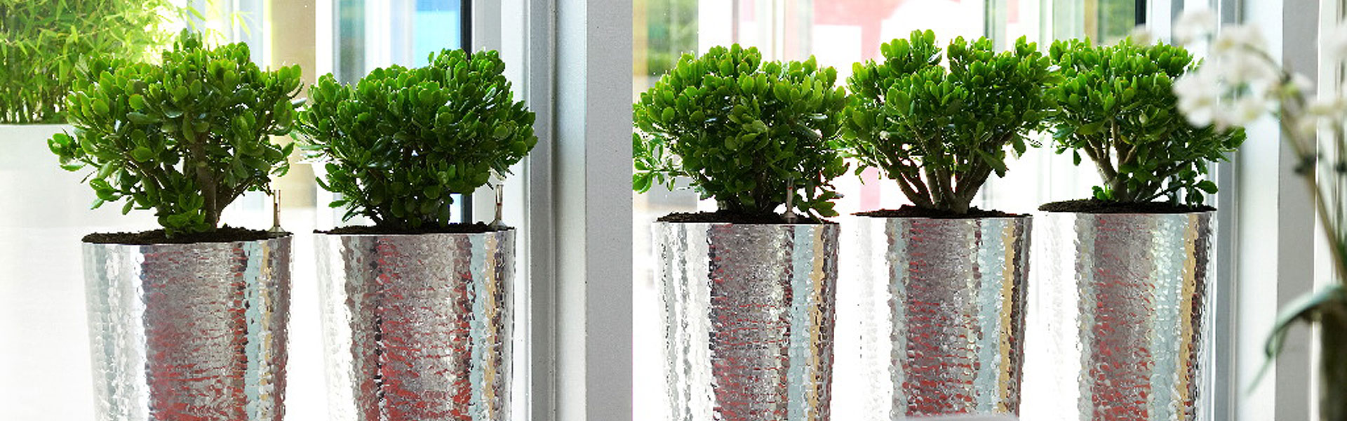 Eco friendly plants for the office