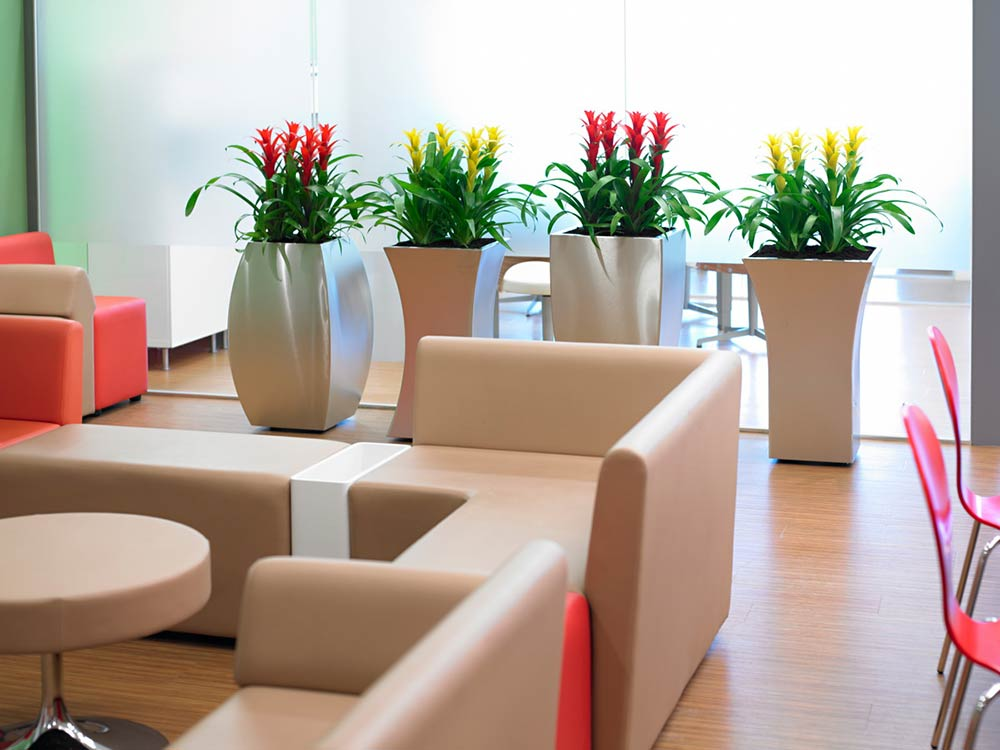 Striking office plants with eco office plants